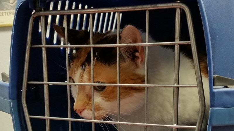 What Cat Carrier Size Do You Need?