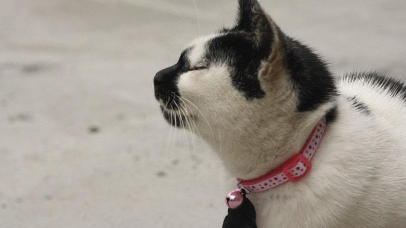 best cat kitten collars