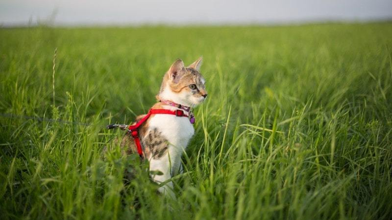 The Best Cat Harnesses