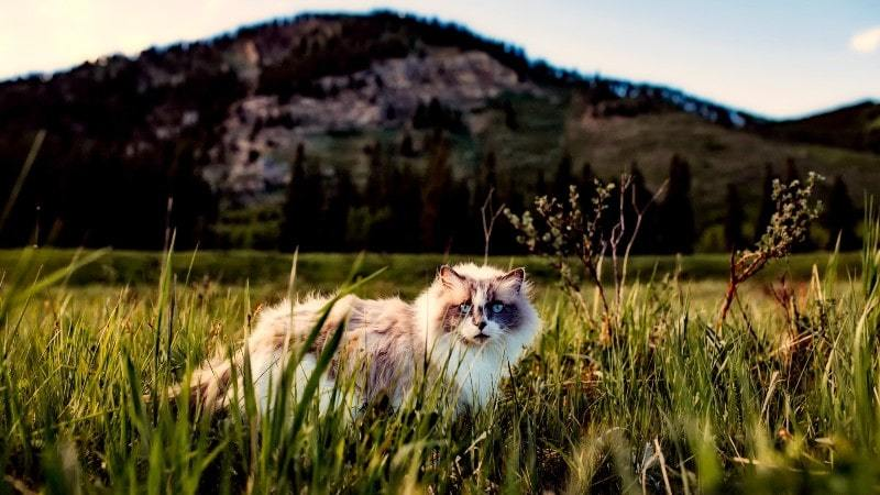 A Quick And Easy Cat Travel Checklist