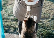 What Cat Food Do Cats Like Best
