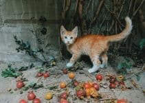 Best Cat Foods for Underweight Cats