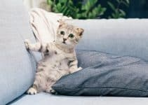 A cat sitting on a sofa after being treated with the best flea shampoo for kittens