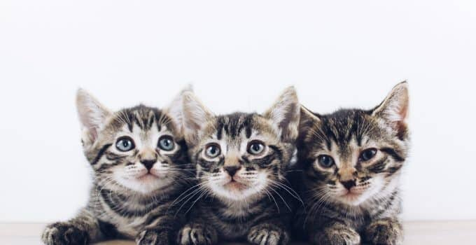 Three kittens sitting together