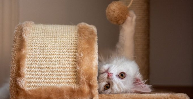 Best Cat Toy for Home Alone Cats