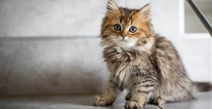 Best Cats for Apartments