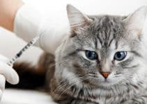 How to Choose the Best Insulin for Cats
