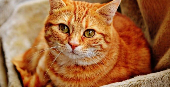 Selecting Healthy Bone Broths for Cats