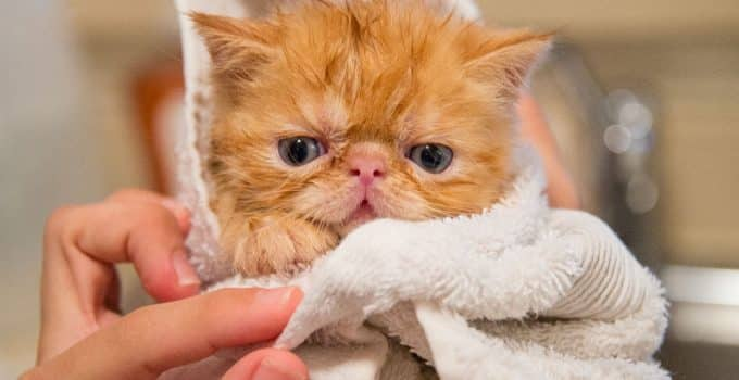 Best Shampoos for Cats