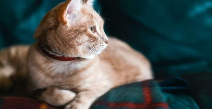 Choosing the right omega 3 supplement for your cat
