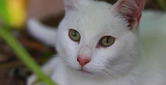 Best Dry Food for Cats with Skin Allergies